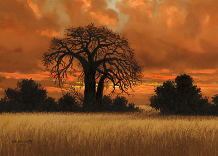 african-sunset-boabab-tree